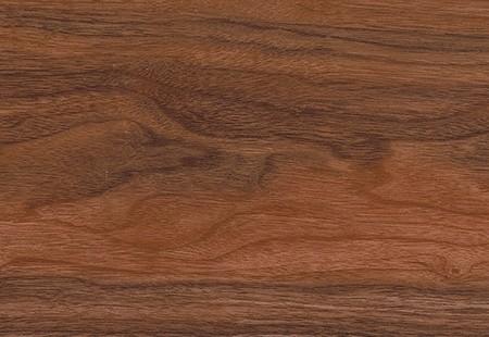 Tasmanian Myrtle